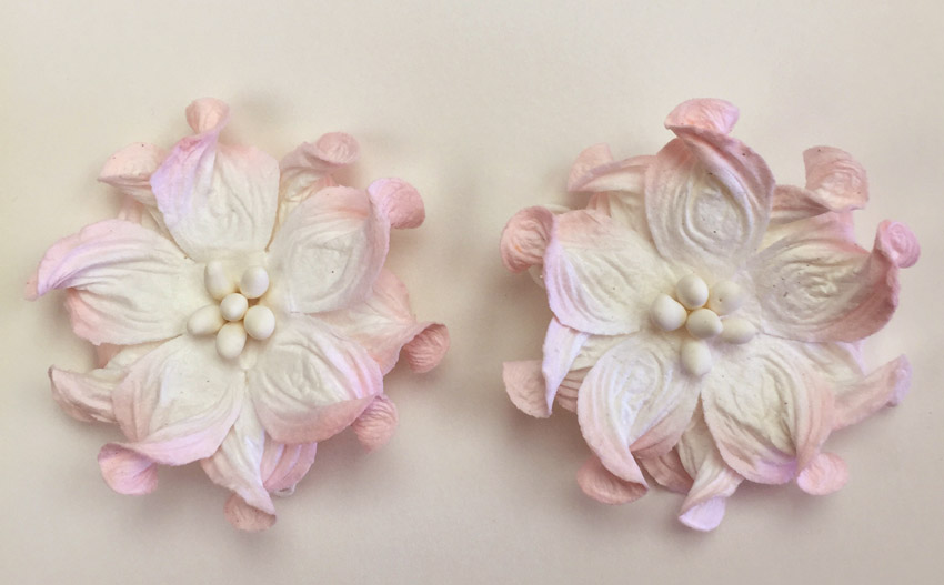 100 Pink/White Apple Blossoms