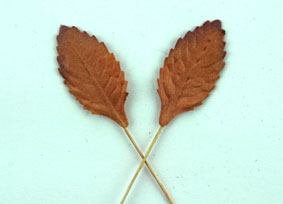 100 Paper Leaves 2.5cm Copper