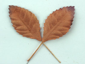 100 Paper Leaves 3.5cm. Copper