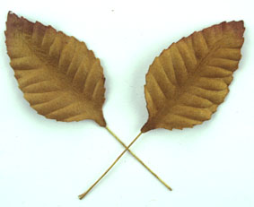 100 Paper Leaves 5cm. Gold
