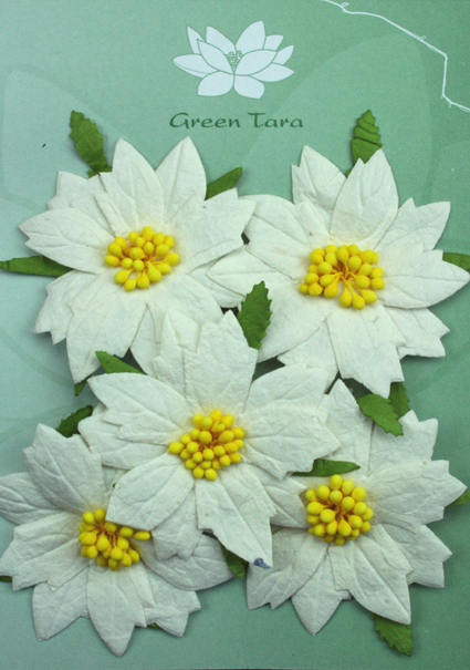 5 x 7cm White Poinsettias with Yellow Centres