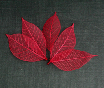 5cm Skeleton Leaves Red Pack of 100