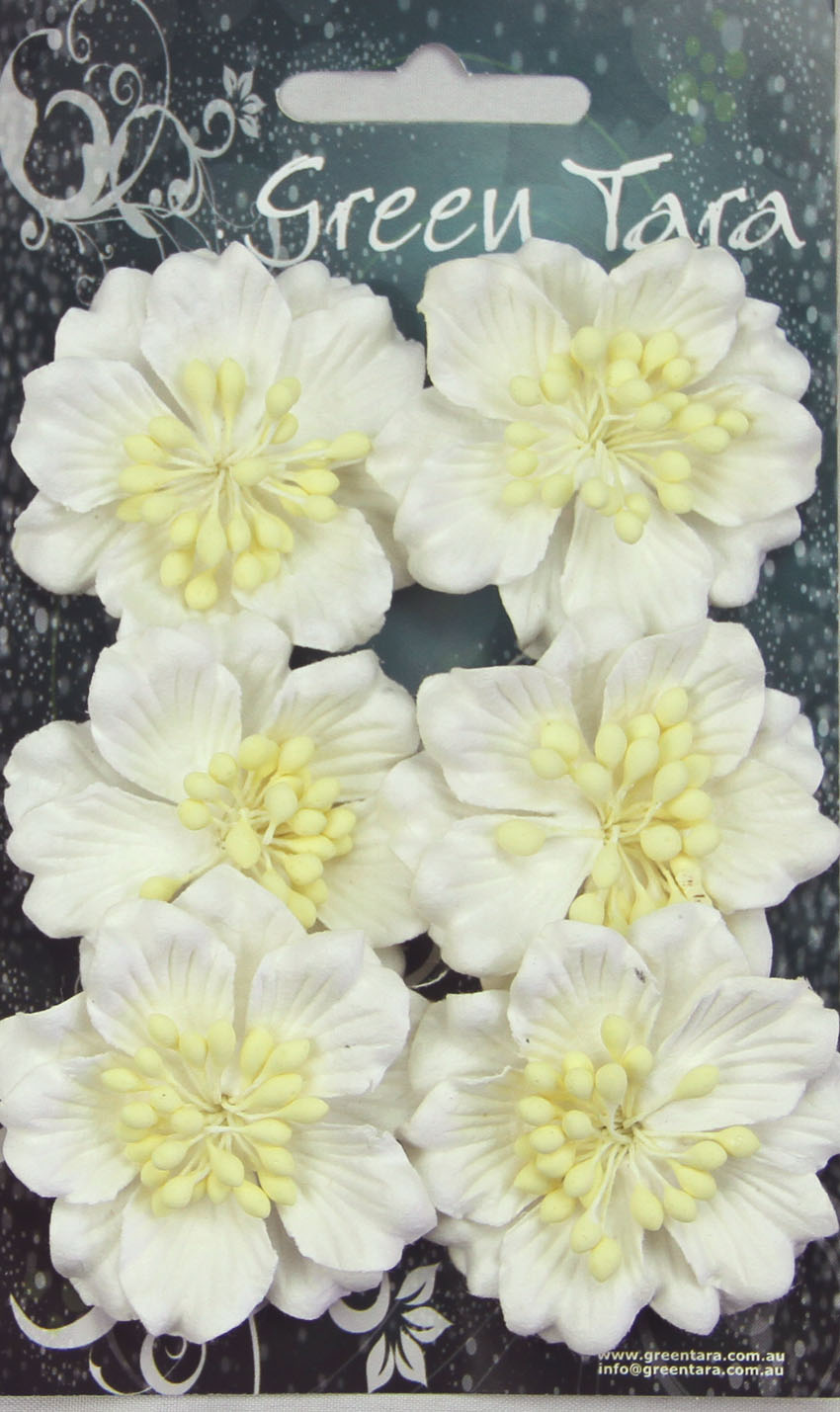 Pack 6 Azaleas, White 45mm
