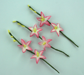 100 2 Flower Stems, Pink/White