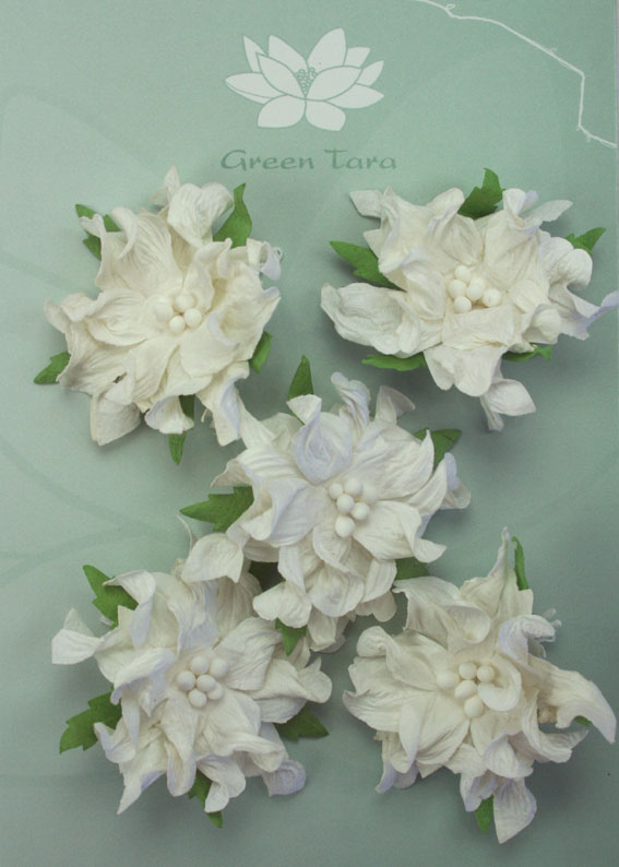 Gardenia White - Pack of 5