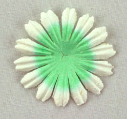 100 4cm Petals, Pale Green / White