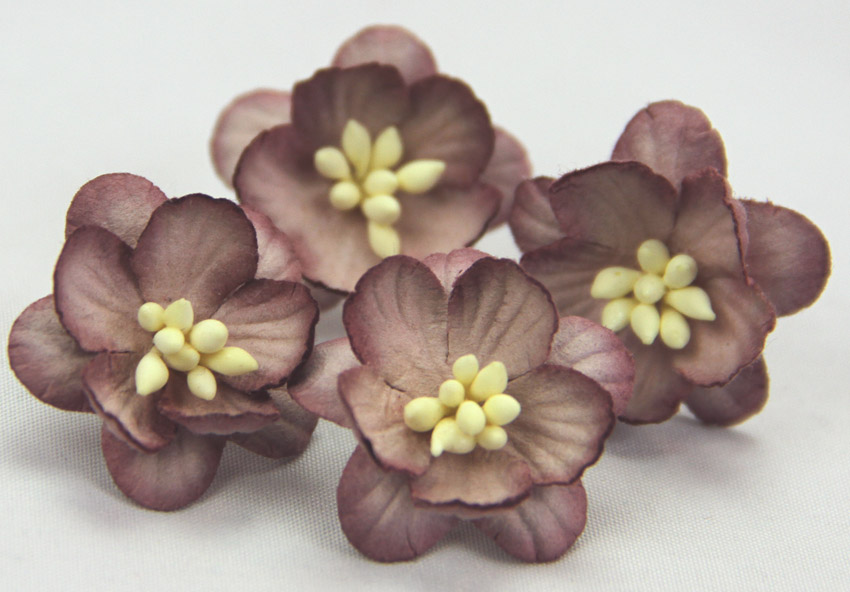 100 Cherry Blossoms 3cm Dark Brown Light Brown