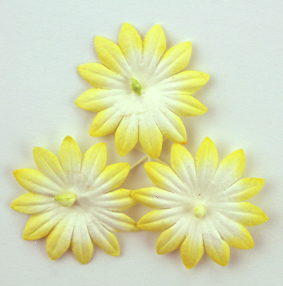 100 Yellow/White flowers