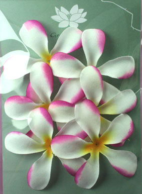 Pack of 6 White and Cerise Frangipanis, 7cm