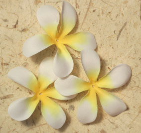 100 Frangipanis - 7cm White and Yellow