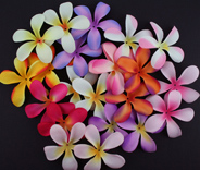 Entire range 7cm Frangipanis 11 Colours 100 Petals in each pack