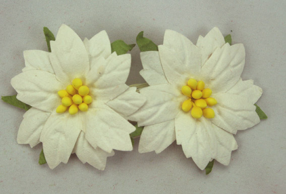 100 Medium White Poinsettias 4cm Yellow Centres