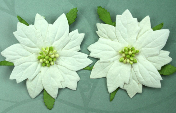100 Large Poinsettias 7cm White Green Center.
