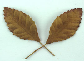100 Paper Leaves 3.5cm Gold
