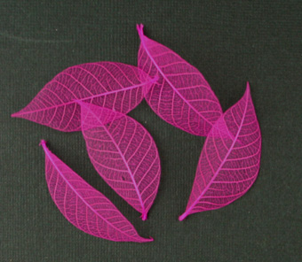5cm Skeleton Leaves Pink Pack of 100