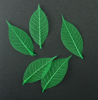 5cm Skeleton Leaves Jade Pack of 100