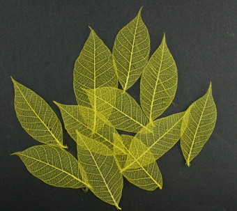 5cm Skeleton Leaves Yellow Pack of 100