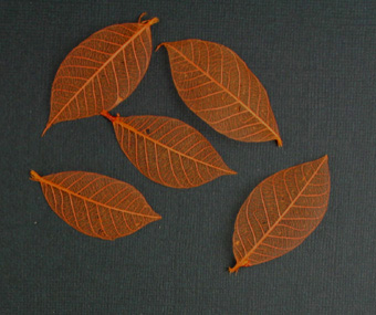 5cm Skeleton Leaves Orange Pack of 100