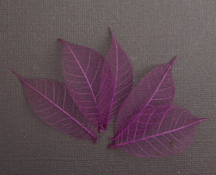 5cm Skeleton Leaves Plum Pack of 100