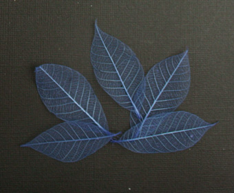 5cm Skeleton Leaves Blue Pack of 100