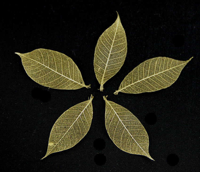 5cm Skeleton Leaves Gold Pack of 100