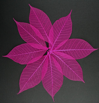 7.5cm Skeleton Leaves Pink Pack of 100