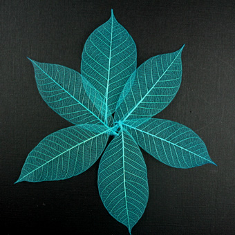 7.5cm Skeleton Leaves Turquoise Pack of 100