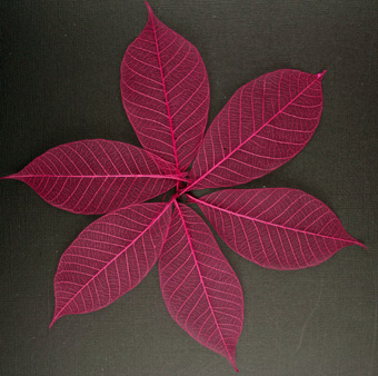7.5cm  Skeleton Leaves Burgundy Pack of 100