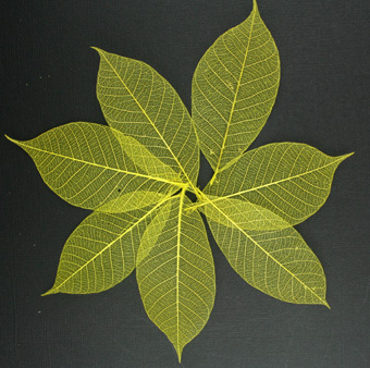 7.5cm Skeleton Leaves Yellow Pack of 100
