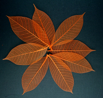 10cm Skeleton Leaves Orange Pack of 100