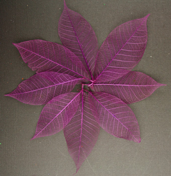7.5cm Skeleton Leaves Plum Pack of 100
