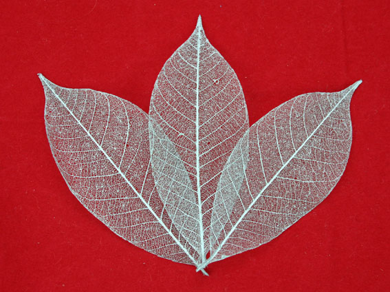 7.5cm Skeleton Leaves Silver Pack of 100