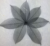 5cm Skeleton Leaves Black Pack of 100