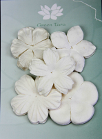 Retail Pack 25 Mixed Petals, White