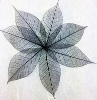 10cm Skeleton Leaves Black Pack of 100