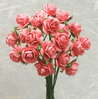 **NEW** 100 Roses 1cm Coral