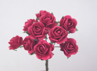 **NEW** 100 Roses 2cm Hot Pink