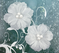 12 Forget me Not 4cm White